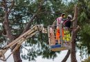 The Benefits of Professional Tree Trunk Removal